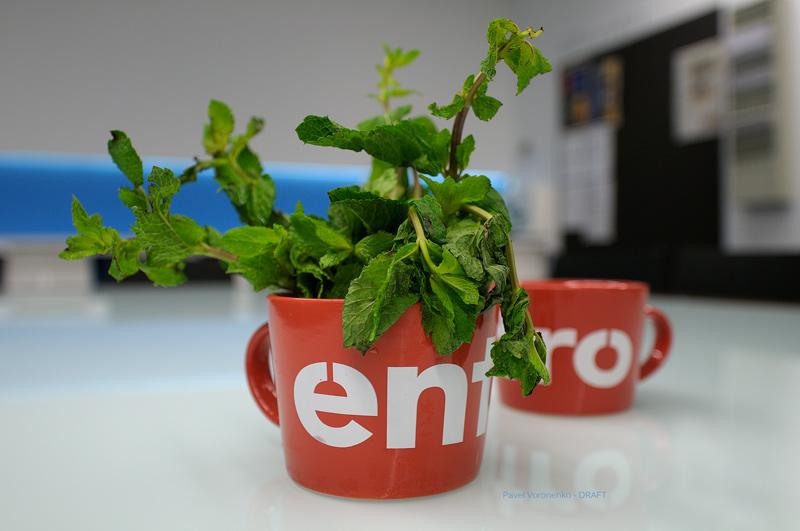 Entro-Mugs with Fresh Mint
